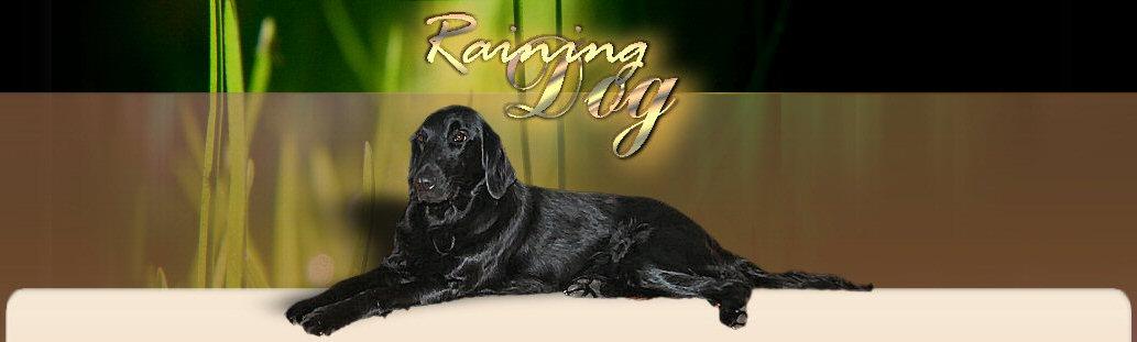 Raining Dog