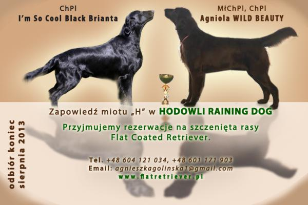 miot H rasy Flat Coated Retriever